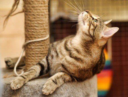 Ein Katzenkratzbaum gehört in jeden Katzenhaushalt