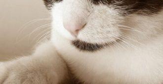 2220770103_308765f18c_cat-claw-370x320-111