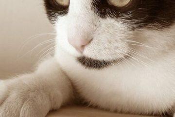 Warum Katzen ihre Krallen wetzen?