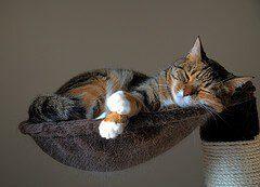 Schlafen auf dem Kratzbaum