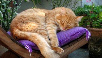 Seniorenkratzbaum – Kratzbäume für ältere Katzen