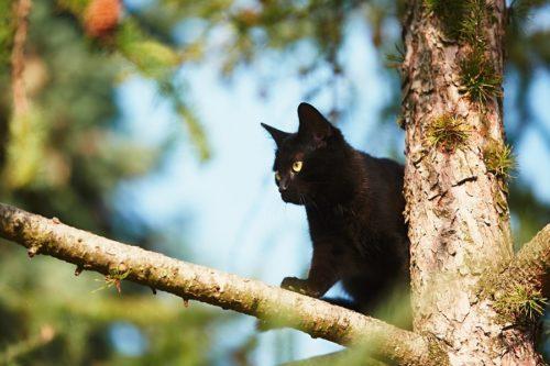 Naturkratzbaum - Katzenkratzbäume aus echtem Naturholz