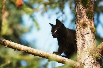 Naturkratzbaum – Zurück zur Natur