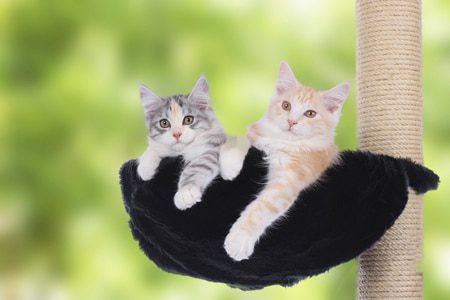 Kratzbaum für 2 Katzen