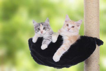 Katzenkratzbäume für zwei Katzen
