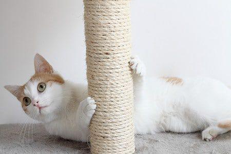 Ein Katzenkratzbaum für Wohnungskatzen ist unentbehrlich zur Krallenpflege