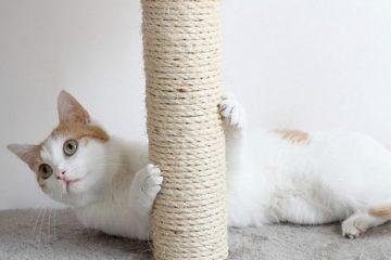 Kratzbaum für Wohnungskatzen unentbehrlich