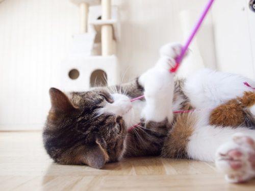 Katzenspielzeug und Kratz- und Klettermöbel für ein abwechslungsreiches Katzenleben!