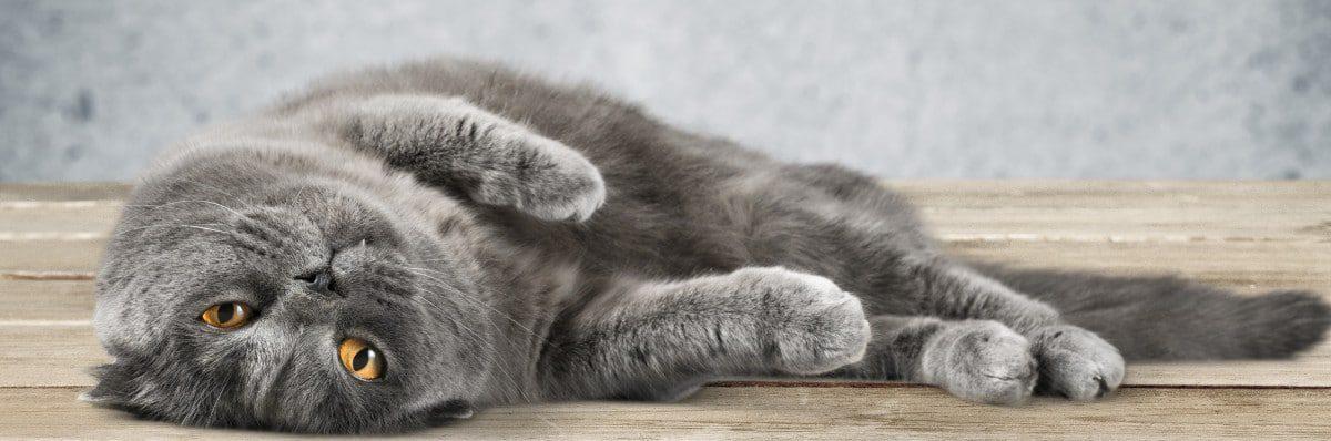 Kratzbäume und Kratzmöbel für Katzen online kaufen!