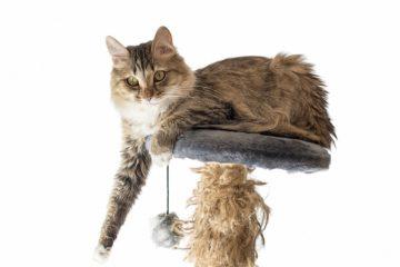 Mit der Katze auf Reisen – Reisekratzbaum zum mitnehmen