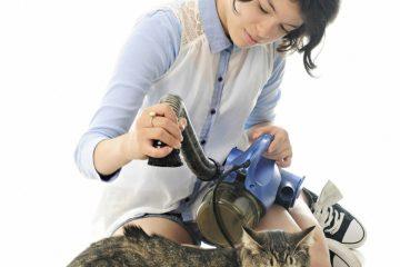 Staubsauger für Katzenhaare – Tierhaare entfernen