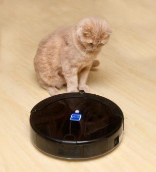 Roboterstaubsauger und Katze