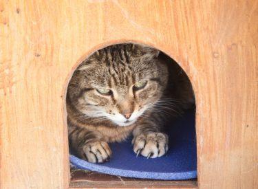 Hundehütte für Katzen