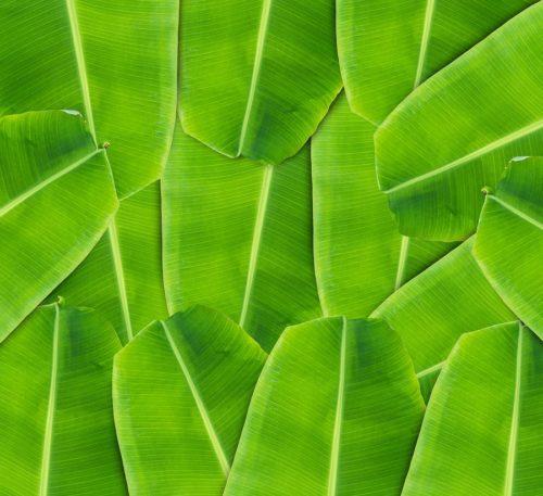 banana leaf für kratzbäume