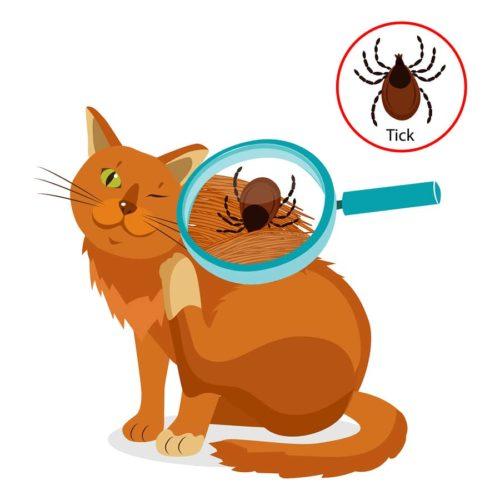 Katze auf Zecken untersuchen