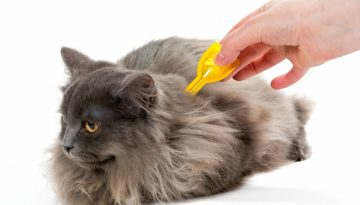bigstock-Protect-The-Cat-From-Ticks-And-809440251