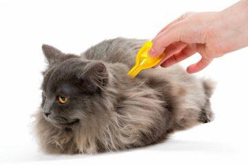 Zeckenschutz für Katzen – Für Freigänger unerlässlich
