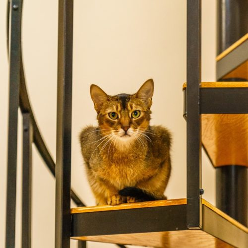 Katzentreppe oder Katzenleiter