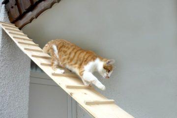 Katzentreppen und Katzenleitern