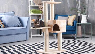 bigstock-Cute-cat-sitting-on-tree-in-mo-1822231781