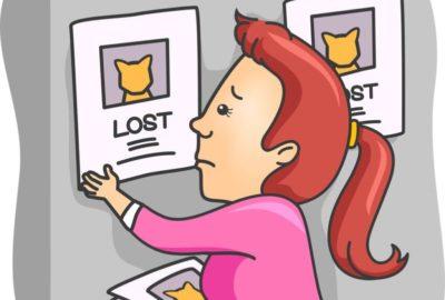 Wird Ihre Katze vermisst?