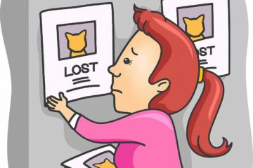 Katze entlaufen? Wie finde ich eine verlorene Katze wieder?