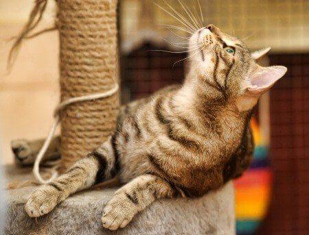 kratzbaum bestellen kratzb ume kletterm bel katzen. Black Bedroom Furniture Sets. Home Design Ideas