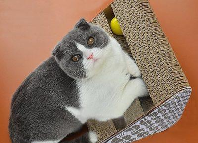 Katzen-Kratz-Spielzeug-Chenci-bild11