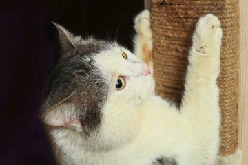 Kratzecke für Katzen – Eckkratzbrett für Wand und Ecken