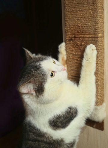 Kratzecke für Katzen - Eckkratzbrett für Wand & Ecken