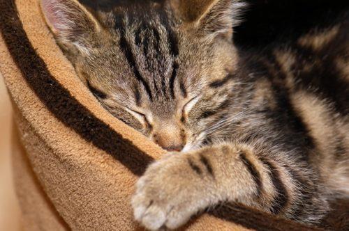Katzenbett - Katze schlafen