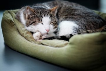 Katzensofas und Katzenbetten