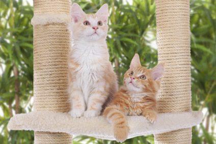Kratzbaum für Kitten - Kratzbäume für Katzenwelpen
