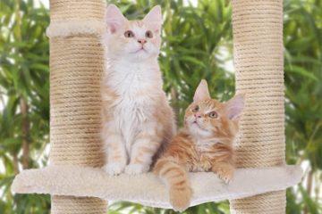 Kratzbaum für Kitten und junge Katzen