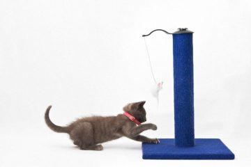 Kratzsäule für Katzen als Alternative zum Kratzbaum