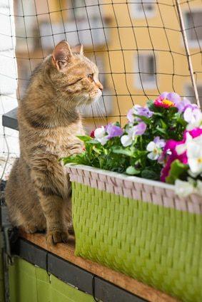 Katzenschutznetz für den Balkon