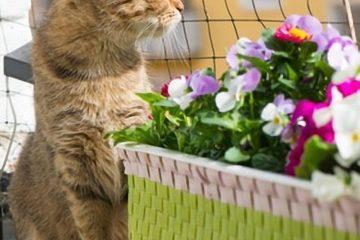Katzennetze – Schutznetze für Balkon und Garten