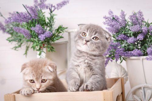 Katze anschaffen - Das sollten Sie wissen