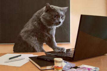 Katze anschaffen – Mit welchen Kosten muss man rechnen?