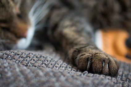 Katzenkrallen pflegen