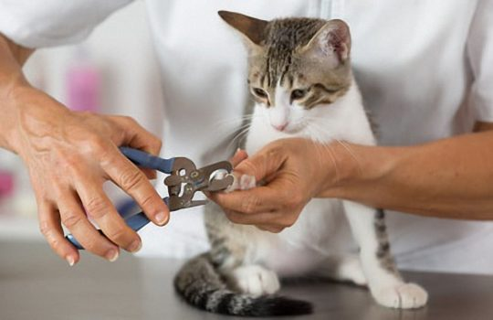 Krallenpflege bei Katzen – Auf was muss man achten?