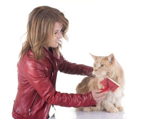 Fellpflege - Bürsten der Katze