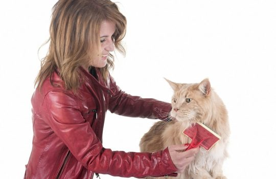 Sinnvolle Fellpflege bei Katzen – Regelmäßiges Bürsten und Kämmen ein Muss