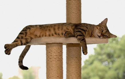 Kratzmöbel mit Liegeflächen zum relaxen