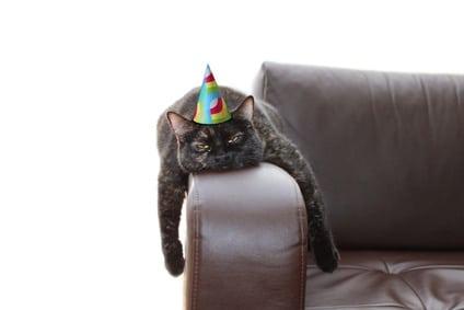 Hat deine Katze Langeweile?