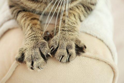 Katze schärft Krallen an Polstermöbel