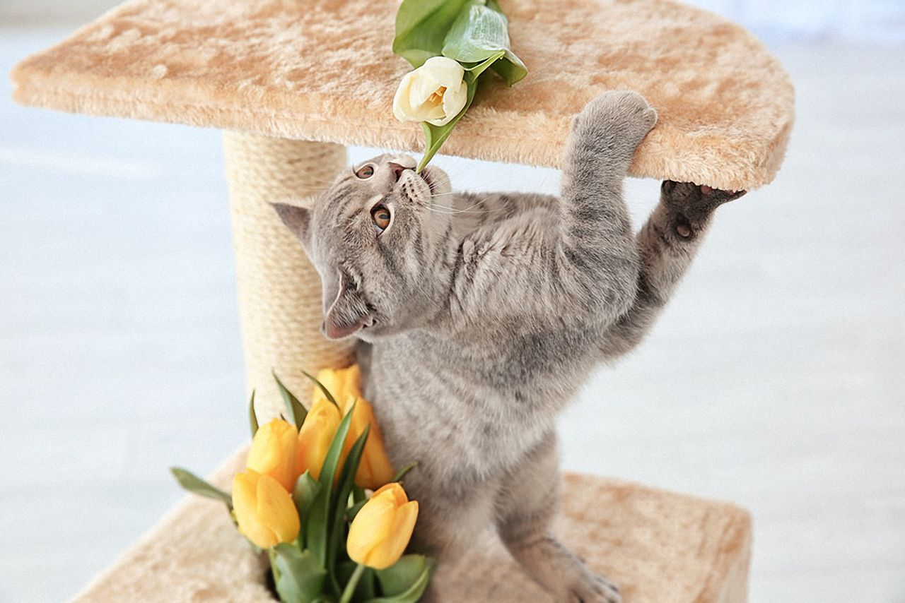 Katze kratzbaum beibringen