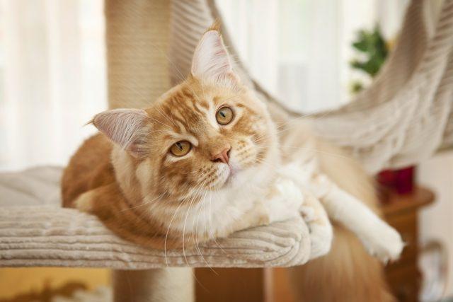 Katze an Kratzbaum gewöhnen
