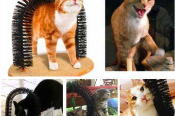 Massagebogen für Katzen – Fellpflege und Wellness für die Katze
