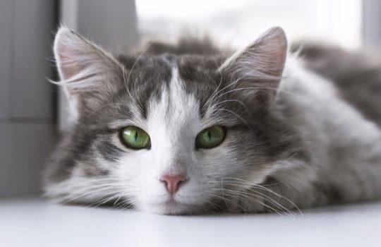 Katzenhaltung in der Mietwohnung – Wann darf ich eine Katze halten?